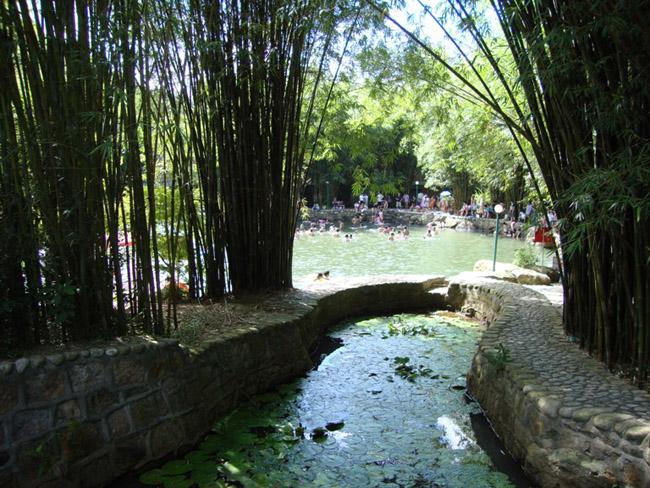 竹林中的泉水池