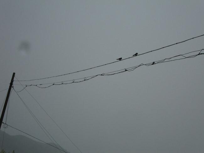 两只小燕子